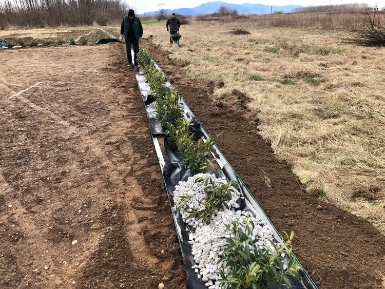 ukrasno_cvijece_grmlje_zemljani_radovi_uredenje_okolisa_hortikultura_oaza_1